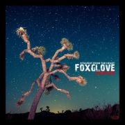Foxglove - straight from the heart PRE-ORDER