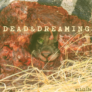 Dead & Dreaming - wildlife